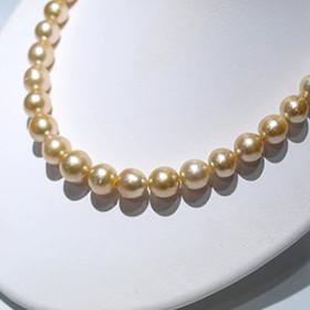 ゴールド真珠 南洋真珠